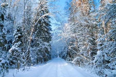 beautiful winter landscape with the forest and the road