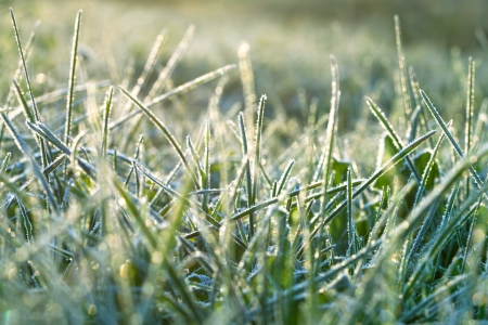 abstract background from a grass covered with hoarfrost