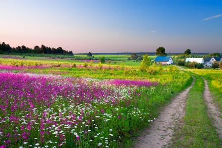 summer rural landscape with a blossoming meadow, the road and a farm 版權商用圖片