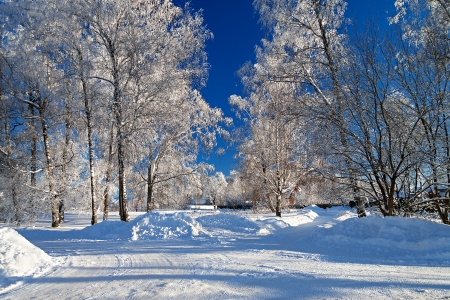 european white birch: winter landscape with the road the forest and the blue sky Stock Photo
