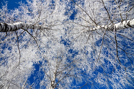 winter landscape with the forest covered with snow against the blue sky Banque d'images