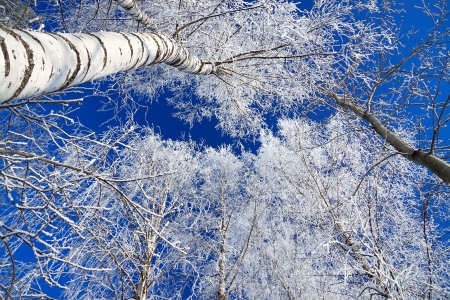 winter landscape with the forest covered with snow against the blue sky photo