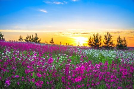 paisaje rural: hermoso amanecer de verano en un prado en flor Foto de archivo