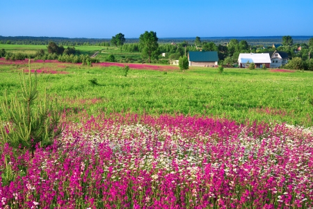 summer rural landscape with the village and a blossoming meadow
