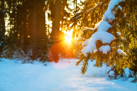 beautiful winter landscape with the forest and sunset