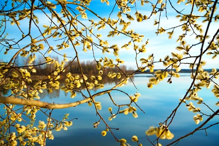 beautiful spring landscape with a blossoming tree and the river Stok Fotoğraf