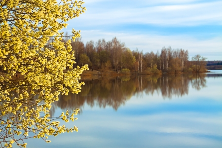 beautiful spring landscape with a blossoming tree and the river photo