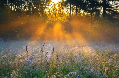 beautiful sunrise over a summer blossoming meadow photo