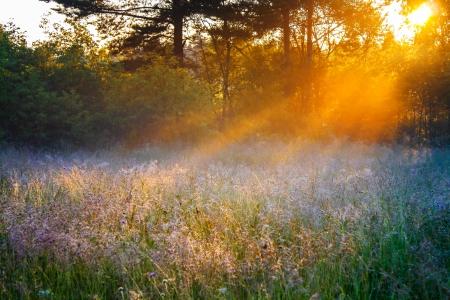 여름 꽃이 만발한 초원 위에 아름다운 일출