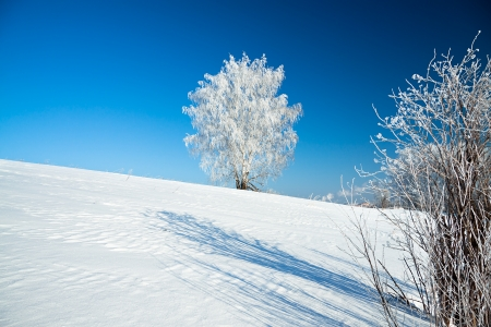 beautiful winter landscape with a lonely tree and the blue sky photo