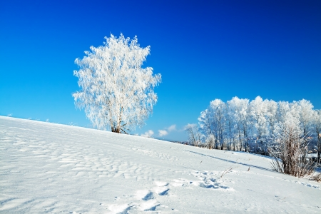 beautiful winter landscape with a lonely tree and the blue sky