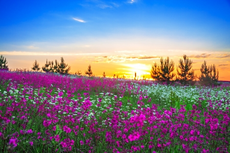 beautiful summer sunrise over a blossoming meadow Stock Photo