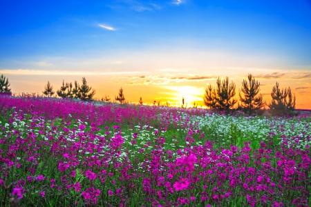 beautiful summer sunrise over a blossoming meadow Foto de archivo