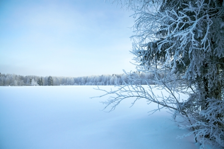 wintery day: beautiful winter landscape with trees and the blue sky
