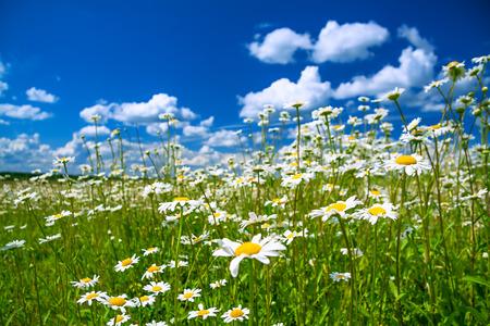 꽃이 만발한 초원과 푸른 하늘 아름 다운 여름 농촌 풍경 스톡 콘텐츠