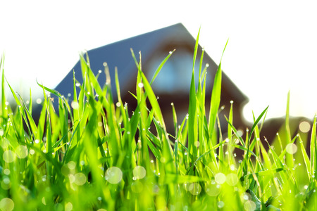 the concept a green grass on a lawn about the house photo