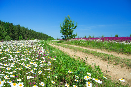 summer landscape with the rural road and a blossoming field photo