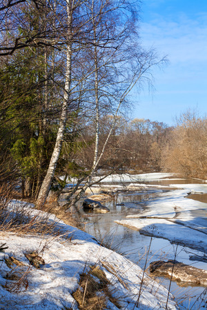 beautiful spring landscape with the river and the wood photo