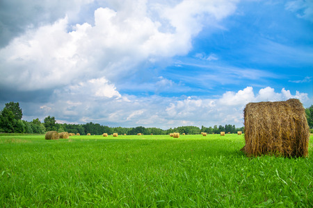 beautiful summer rural landscape with a field and hay photo