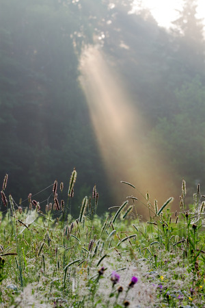 summer sunrise over the wood in a fog photo