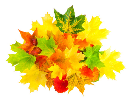 colored autumn leaves isolated on a white  photo