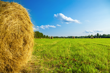 summer rural landscape with a field and hay Stock Photo