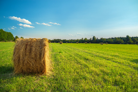summer rural landscape with a field and hay photo