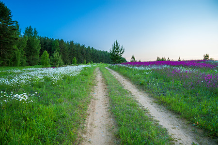 summer rural landscape with a blossoming meadow and  the road photo