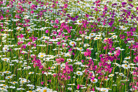 beautiful multi colored flowers blossoming on a meadow photo