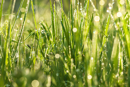 green background from a grass on a lawn photo