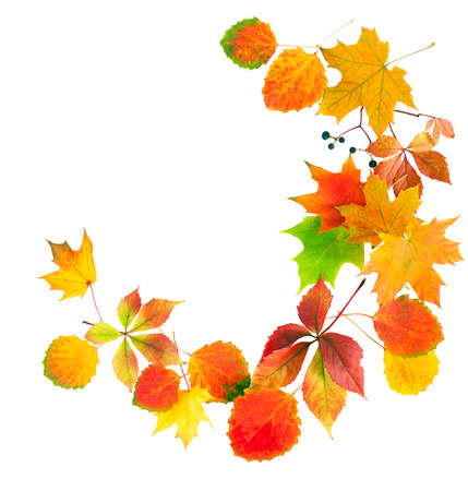 multi colored autumn leaves isolated on a white background photo