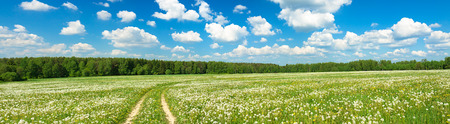 summer landscape panorama with  blossoming  field  with the road and blue sky photo