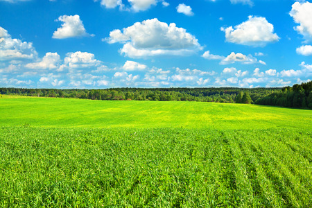 summer rural landscape with the blue sky, clouds and field,agriculture photo