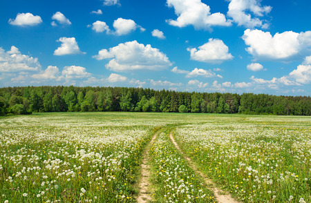 summer rural landscape with a blossoming meadow, the road and the blue sky photo