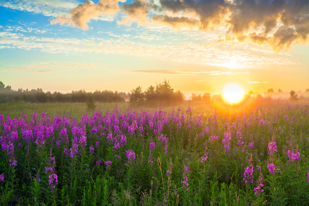 beautiful rural landscape with the sunrise, a blossoming meadow and fog Stok Fotoğraf