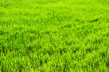 background from a green grass in the field photo