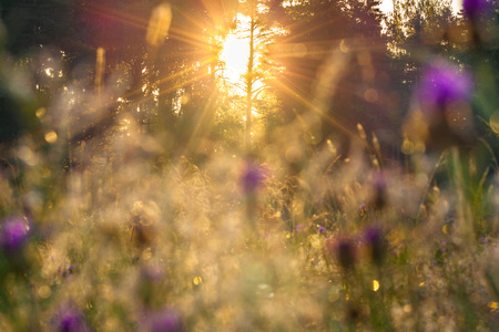 beautiful sunrise over a blossoming meadow photo