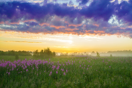 beautiful rural landscape with the sunrise, a blossoming meadow and fog photo