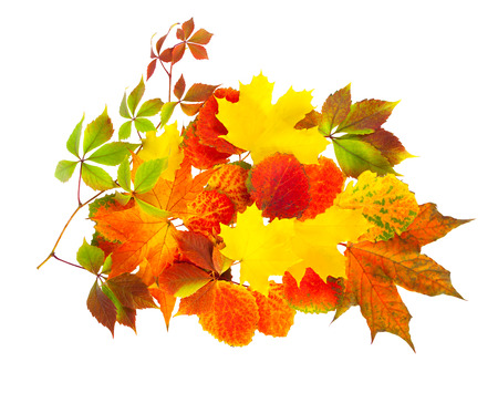 colored autumn leaves isolated on a white background photo