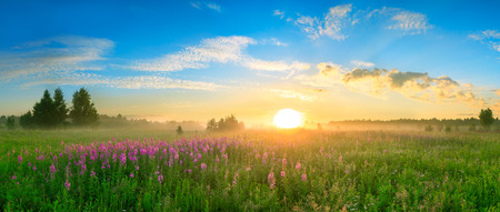 landscape with the sunrise, a blossoming meadow and fog panorama
