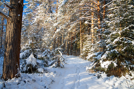 beautiful winter landscape with the forest and a footpath photo