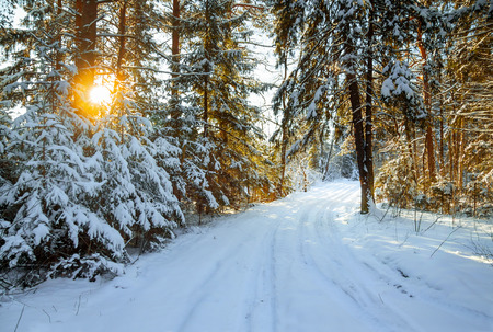 beautiful winter landscape with the forest and a road photo
