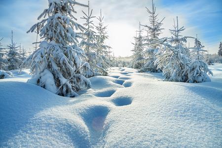 mooie winterlandschap met het bos en de blauwe hemel