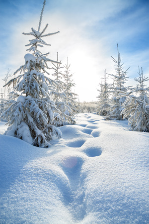 winter season: beautiful winter landscape with the forest  and blue sky Stock Photo