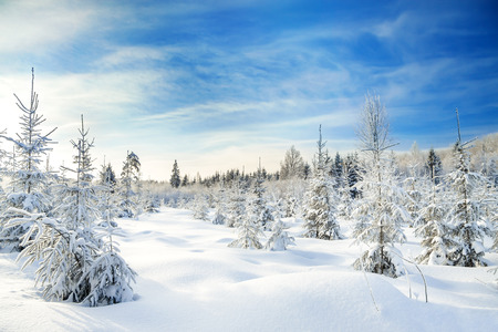 clear day in winter time: beautiful winter landscape with the forest  and blue sky Stock Photo
