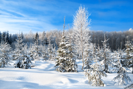 beautiful winter landscape with the forest  and blue sky Stok Fotoğraf