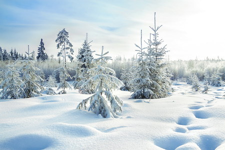 clear day in winter time: beautiful rural winter landscape with the forest