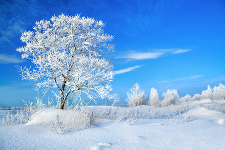 beautiful rural winter landscape with a one tree and the blue sky photo