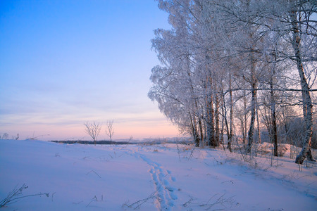 wintery day: the winter rural landscape with a sunset in the forest