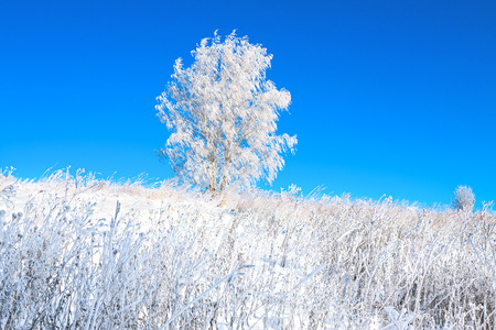 beautiful winter landscape with a lonely tree in a field and the blue sky photo